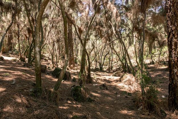 Las tropikalny z suszonymi chwastami