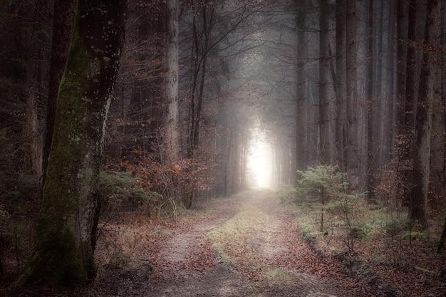 Las w ciągu dnia