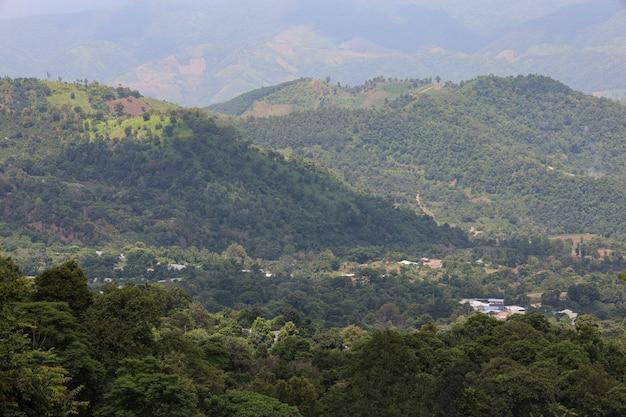 Las w górach przyrody