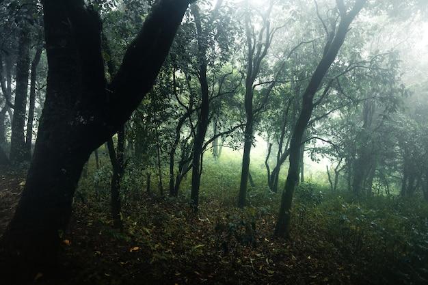 Las w mglisty deszczowy dzień, paprocie i drzewa