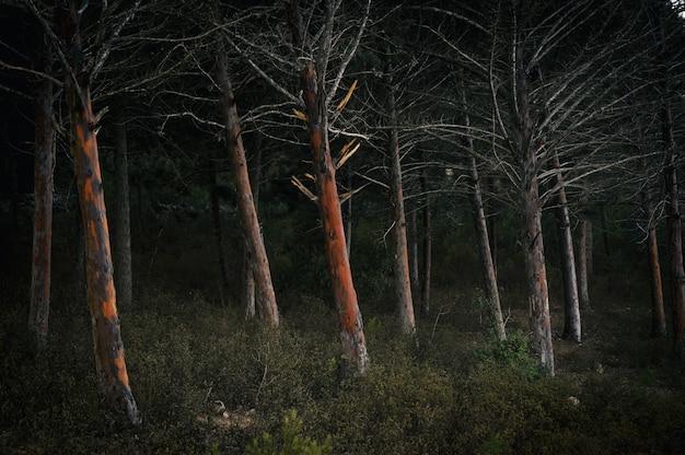 Las w nocy porośnięty krzewami i drzewami
