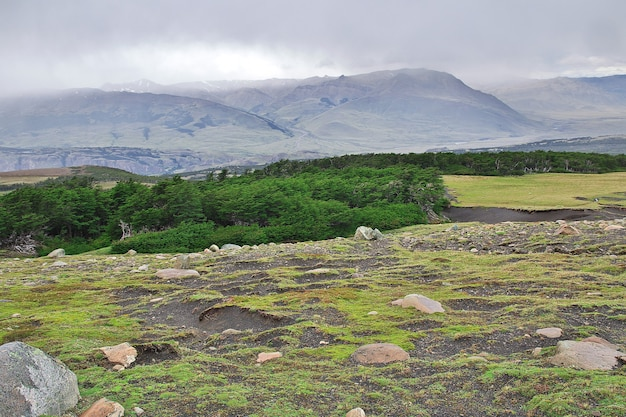 Las w parku narodowym los glacier w pobliżu fitz roy, el chalten, patagonia, argentyna