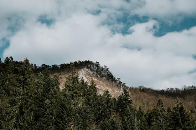 Las w pobliżu kladanj w bośni i hercegowinie