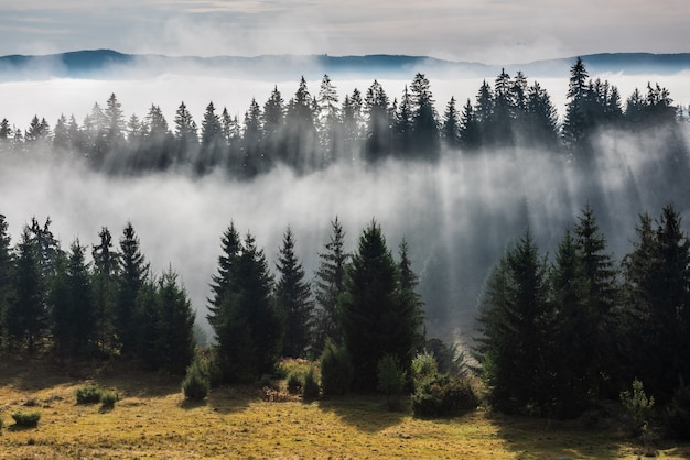 Las w porannej mgle. mgła podzielona promieniami słonecznymi. widok mglisty poranek w mokrej okolicy górskiej.