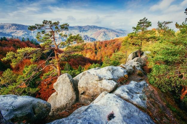 Las w słoneczne popołudnie podczas sezonu. jesienny krajobraz. ukraina