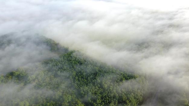 Las we mgle widok z lotu ptaka. rano jesień krajobraz o zachodzie słońca.