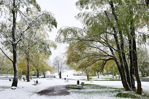 Las wiosną pokryte śniegiem
