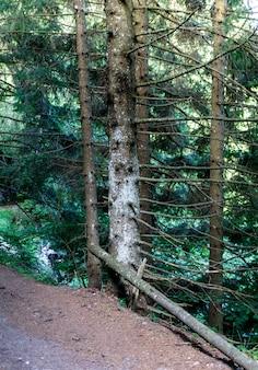 Las wokół jeziora pra da stua w prowincji trento