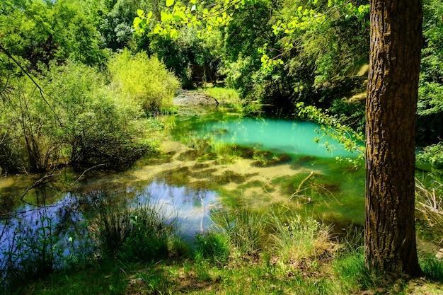 Las z bujną roślinnością w słoneczny letni dzień.
