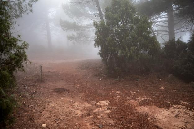 Las z drzewami i mgła krajobrazem