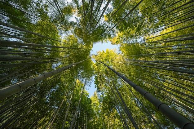 Las z drzewami z bliska