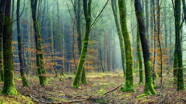 Las z drzewem i mchem
