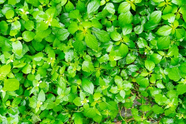 Las z kwitnącymi drzewami i zieloną trawą