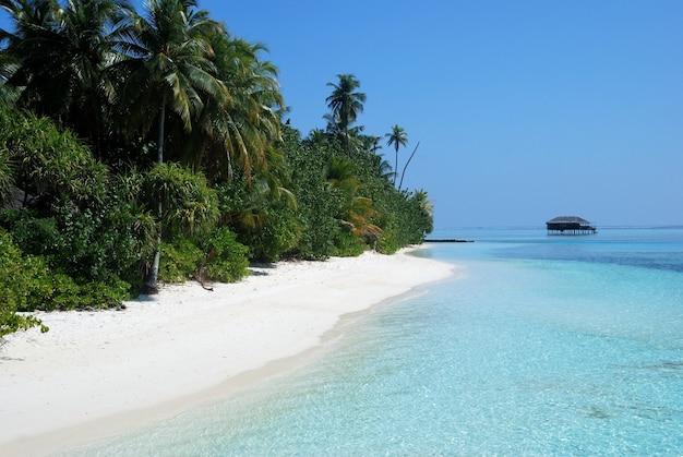 Las z palmami na brzegu w pobliżu plaży z domem w oddali