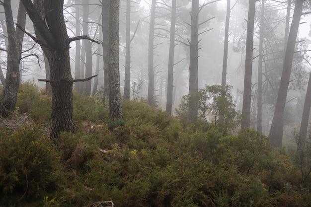 Las z piękną roślinnością i drzewami