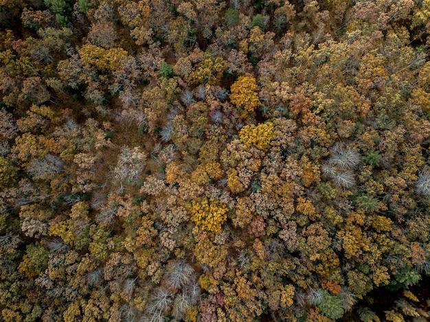 Las z różnymi kolorowymi drzewami