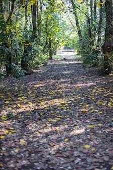 Las z suchych liści pokrywających ziemię