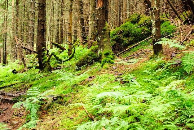 Las z zwalonymi drzewami i zielenią