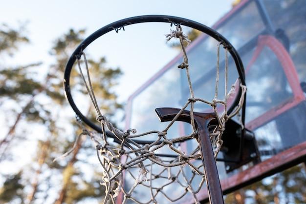 Laska na obręczy do koszykówki, na tle przyrody. w dowolnym celu.