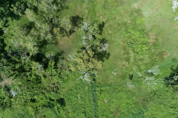Lasowi wzrostowi drzewa, natury tła zielonego lasowego widok z lotu ptaka trutnia strzał
