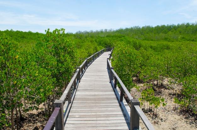 Lasowy mangrowe przy petchaburi, tajlandia.