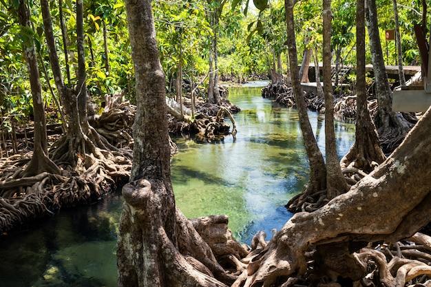 Lasy namorzynowe w tajlandii