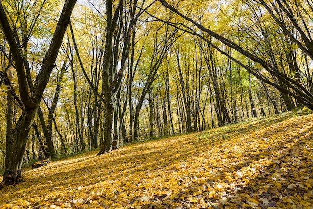 Lasy rosnące jesienią na terenach pagórkowatych, oświetlone promieniami słońca wczesną jesienią i w połowie jesieni
