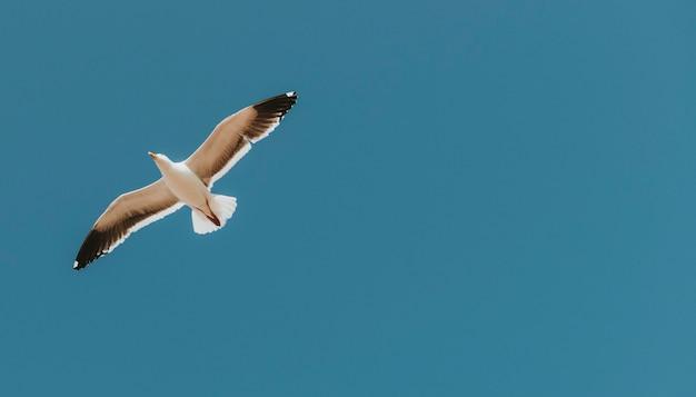 Latająca mewa na niebieskim niebie
