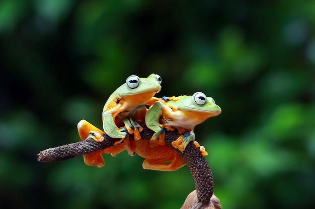 Latająca żaba w oddziale