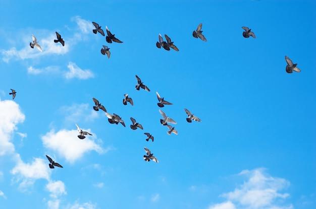 Latające gołębie