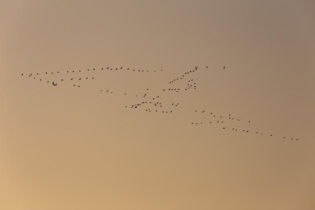 Latające zimowe ptaki wędrowne