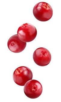 Latający brusznica na białym tle. całe jagody opadają.