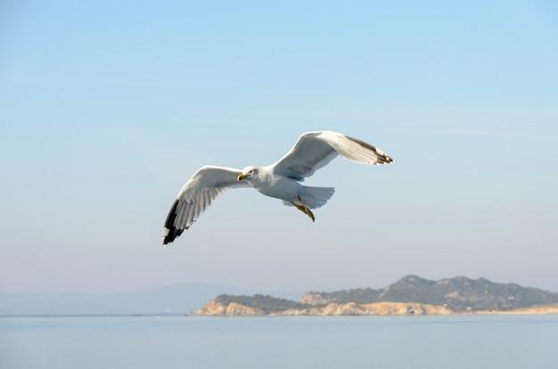 Latający mewa nad morzem