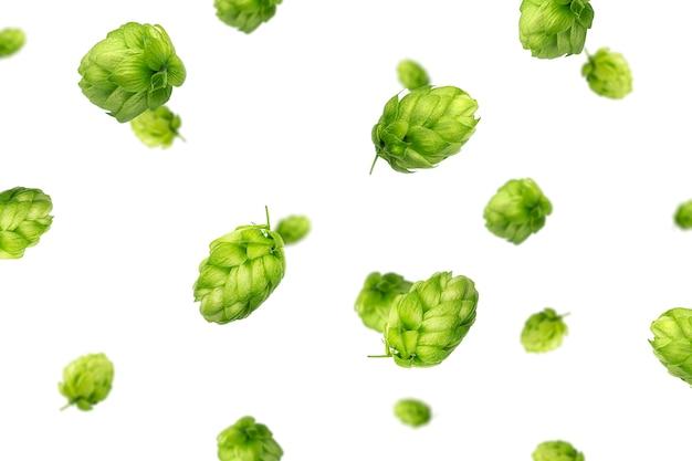 Latający zielony chmiel na białym tle