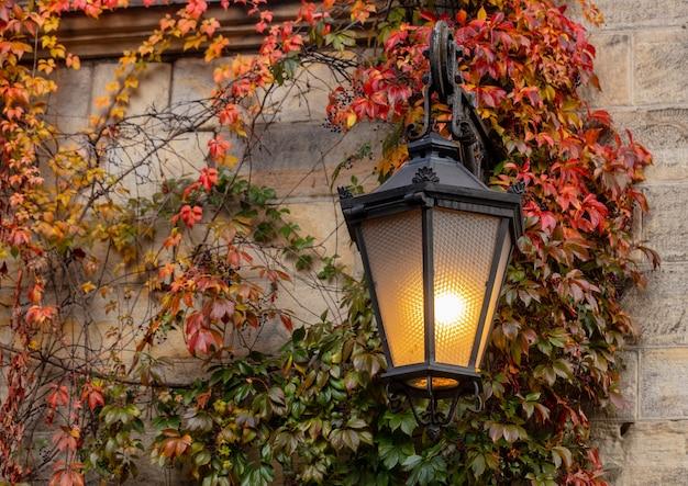 Latarnia ścienna i pnącze virginia na ulicy jesienią