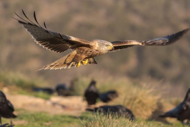 Latawiec królewski latające nad niebo z krajobrazem w tle