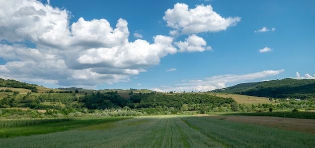 Lato krajobraz w bucovina, rumunia