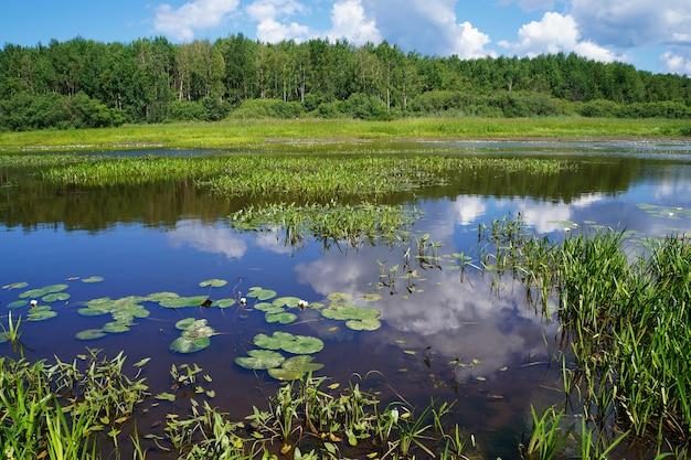 Lato krajobraz z rzeką i lasem w pogodnej pogodzie.