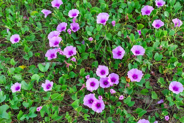 Lato kwiatu tło