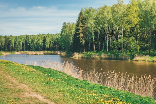 Lato las i rzeka pod błękitnym niebem. krajobraz rzeczny na białorusi.
