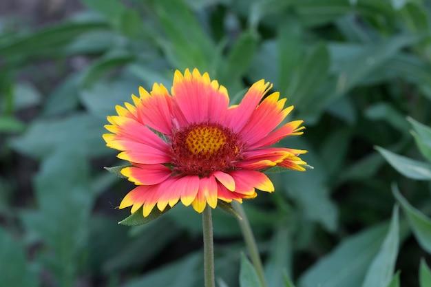Lato piękny kwiat