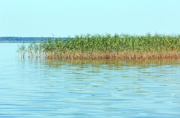 Lato rushy widok na jezioro (svityaz, szacki narodowy park przyrody, ukraina).