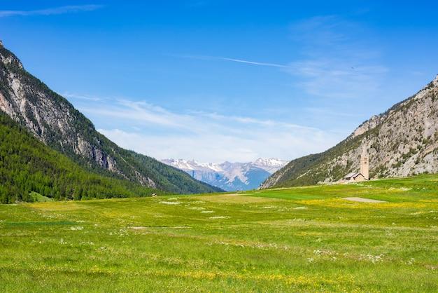 Lato w alpach. kwitnąca alpejska łąka i bujny zielony las
