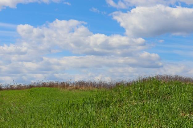 Lato w tle to zielona trawa i błękitne niebo z białymi chmurami. naturalne tło dla miejsca reklamy. wiosna.