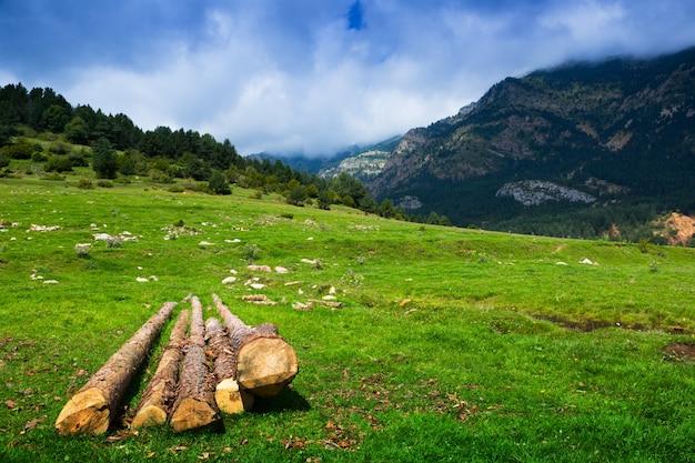 Lato widok górska łąka z chmurnym niebem
