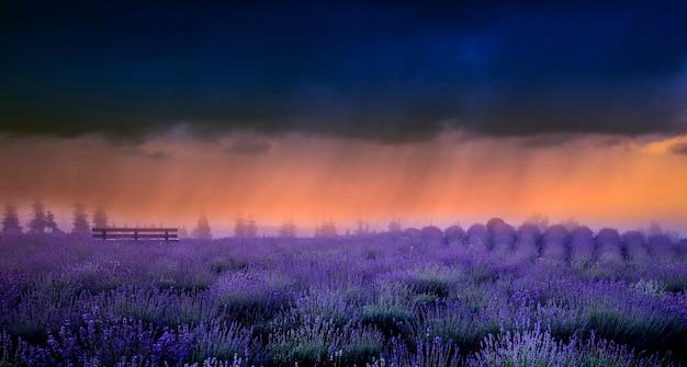 Lawendowe pole, burzowe chmury i letni deszcz, wieczorny krajobraz.