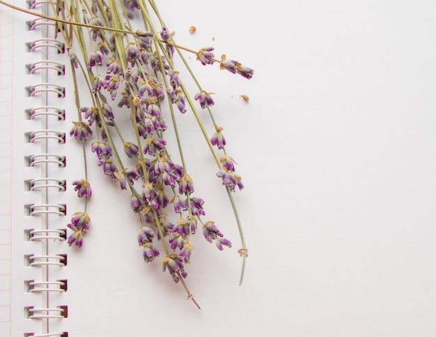 Lawendowi kwiaty kłama na otwartym notatniku