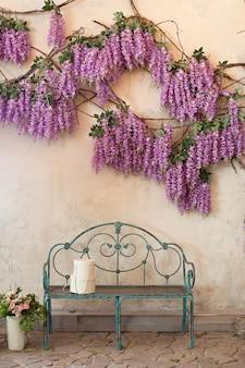 Ławka dekoracyjna pod purpurowym glicynią. kwitnące rośliny glicynii ściany domu z ławką. kwitnące glicynia w parku przy ławce ogrodowej. glicynia kwitnie wiosną