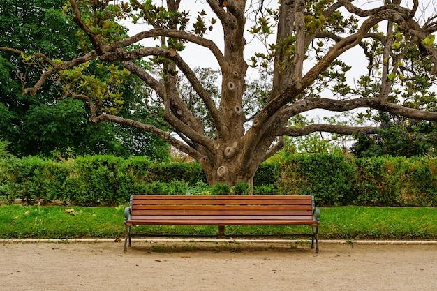 Ławka do siedzenia w publicznym parku z dużym drzewem magnolii z tyłu
