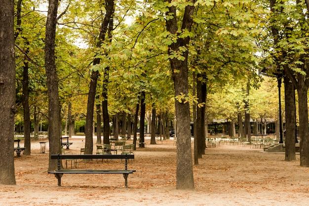 Ławka parkowa z suchymi liśćmi na ziemi w paryżu